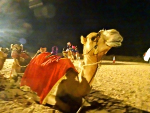 The infamous camel...