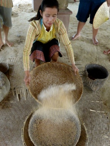 Separating the shelled rice.