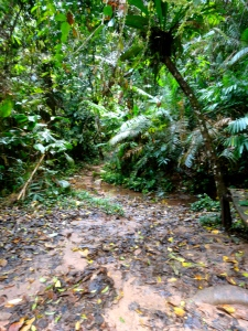 The jungle of the Bokeo Nature Reserve.