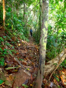 Julie hiking up our trail in the jungle.