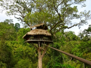 One of our jungle tree houses.