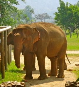 Elephant feeding area.