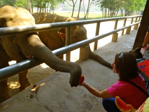 Me, feeding watermelon to the elephants.