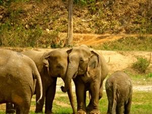 Elephant bonds are amazing.