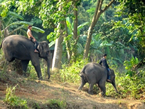 Mahouts riding elephants from the neighboring elephant park.