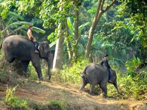 Mahouts riding elephants from the neighboring elephant park.