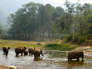The ENP elephants watching and reacting to the cry for help coming from the elephant at the neighboring park.