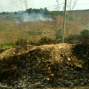 Slash and burn farming on the drive to Luang Prabang, Laos.