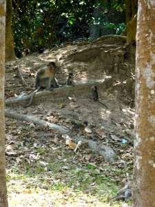 Monkeys playing on the grounds of Bayon Temple.