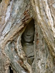 Faces engulfed in tree roots