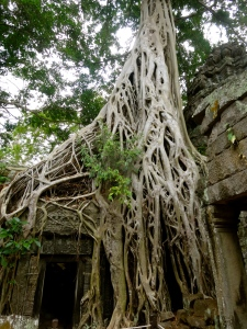 The trees of Ta Prohm