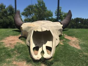 Buffalo Skull at the visitor center in Abilene, Texas. The visitor center was one of the nicest I've seen.